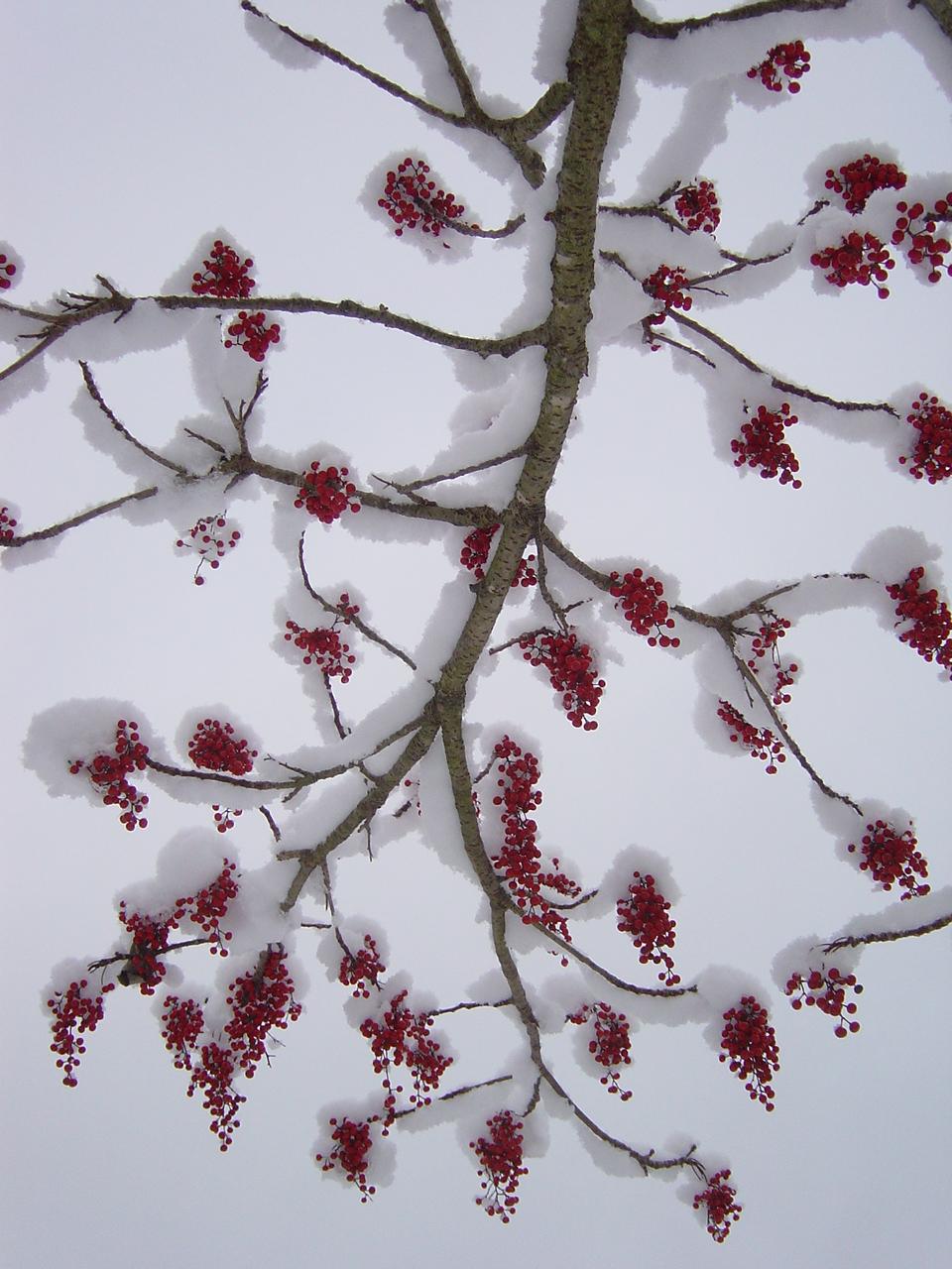 冬のナンテンギリ